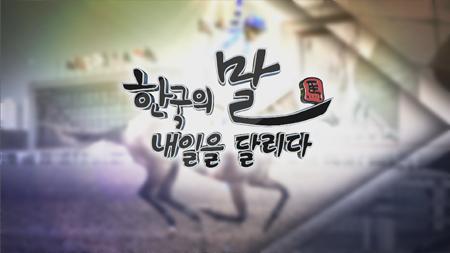 [스페셜] 한국의 말, 내일을 달리다 2부: 한국마, 세계를 향한 도전