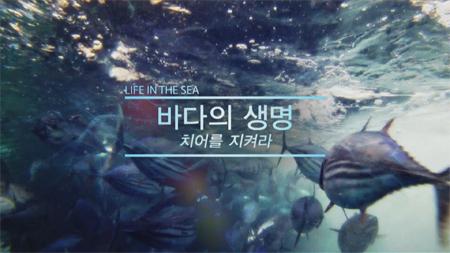 [스페셜] 바다의 생명, 치어를 지켜라