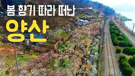[구석구석 코리아] - 봄 향기 따라 떠난, 양산